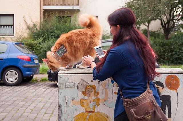 cat-exploit-03.jpg