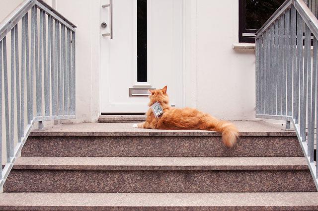 cat-exploit-04.jpg